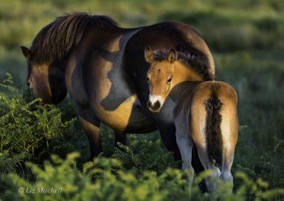 ews-gallery-fauna-18