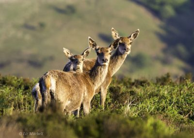 ews-gallery-fauna-4