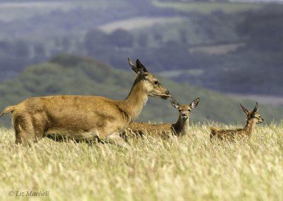 ews-gallery-fauna-25