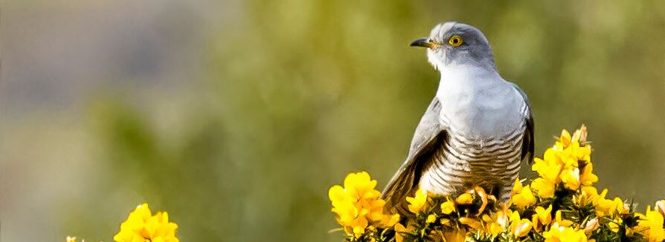 Exmoor bird sitting on a branch of heather